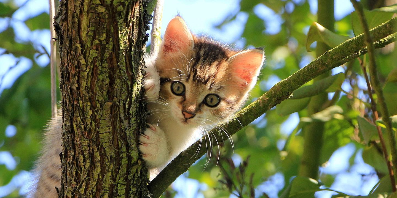 cat-1647775