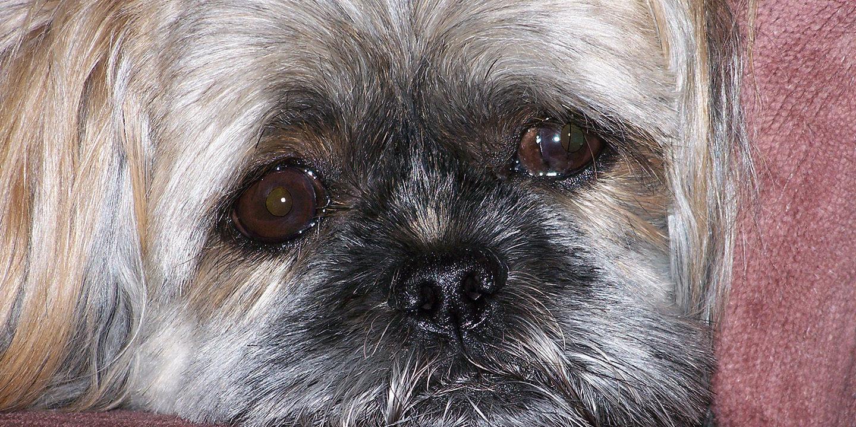 Hund trauert